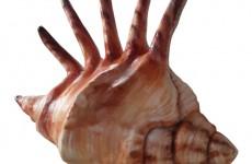 Mô hình composite vỏ ốc biển