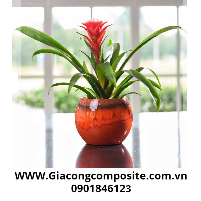 Chậu hoa composite mang giá trị kinh tế cao