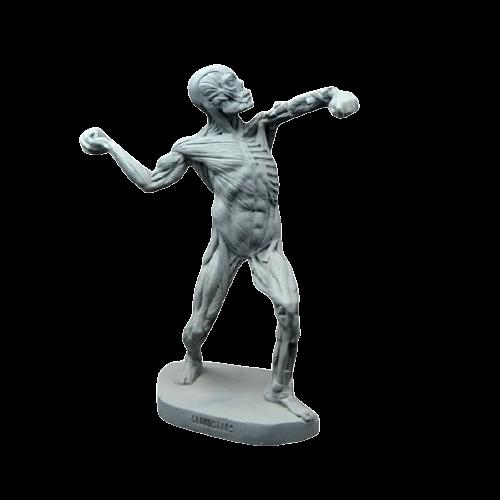 Mô hình hệ cơ của cơ thể người bằng  nhựa composite
